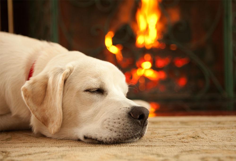 chien près du feu