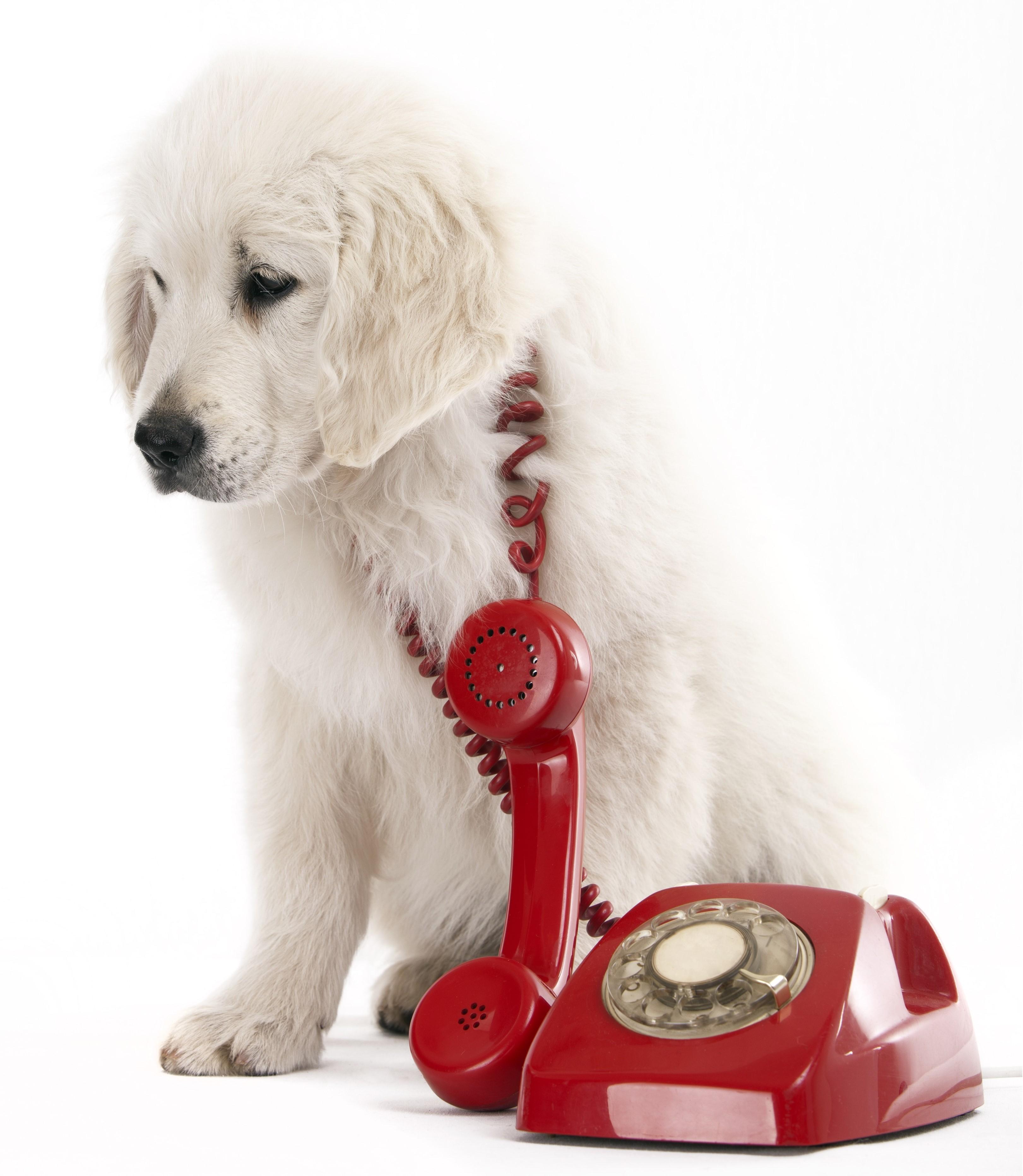 appel urgent